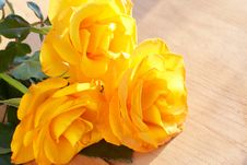Free Bunch Of Yellow Roses Stock Images - 19011854
