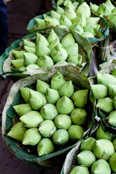 Bunches Of Green Lotus Blossom Buds Stock Photo
