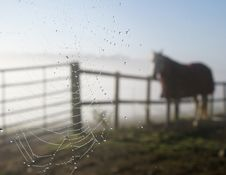 Free Cobweb Horse Stock Photography - 19012932