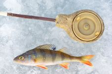 Free Perch Fish With Rod Stock Image - 19013341