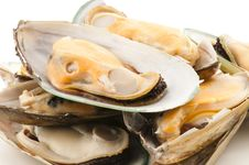 Free Mussel Stock Photography - 19014602