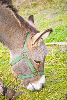 Free Small Circus Donkey Royalty Free Stock Images - 19015629