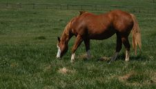 Free Horse In The Field Royalty Free Stock Image - 19016336