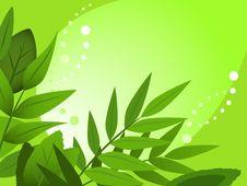 Free Green Spring Stock Photos - 19019483