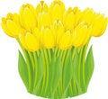 Free Yellow Tulips. Stock Image - 19023231