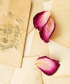 Free Old Photo And Petals Stock Photos - 19021893