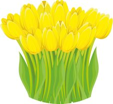 Free Yellow Tulips. Stock Image - 19023231