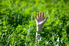 Free The Hand Stretched From A Grass Royalty Free Stock Photography - 19024237