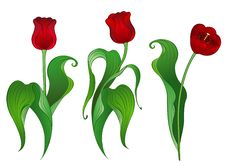 Free Three Red Tulips Stock Photo - 19026990