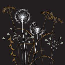 Free Floral Background, Dandelion Stock Photos - 19027933