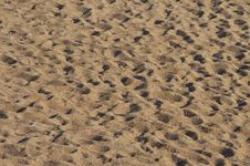 Free Sand Foot Prints Royalty Free Stock Images - 19028989