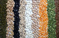 Free Various Seeds And Grains Royalty Free Stock Photo - 19033045