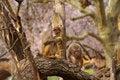 Free Rhesus Monkeys At Heidelberg Zoo, Germany Stock Photo - 19037940