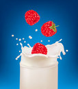 Free Red Raspberry Fruits Falling Into The Milk Splash Stock Images - 19038324