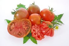 Free Tomatoes Royalty Free Stock Photography - 19030527