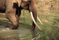 Free Elephant Stock Photos - 19034083