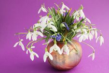 Free Snowdrops In Vase Royalty Free Stock Photos - 19036668