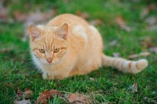 Free Cat Stalking Stock Images - 19036734