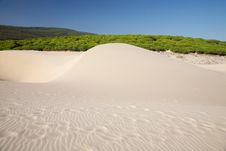 Free Dune And Forest Royalty Free Stock Photography - 19037027