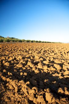 Free Fields At Andalucia Stock Photo - 19037110