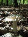 Free Spotty Inedible Mushroom_1 Stock Photography - 19041042