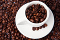 Free Cup Full Of Coffee Beans Stock Image - 19044141