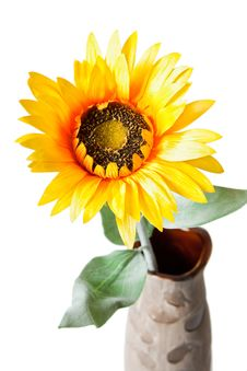 Free Orange Sunflower In A Vase. Stock Photo - 19041990