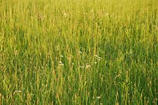 Free Meadow Spring Background Royalty Free Stock Photos - 19042178