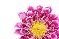 Free Purple Flower In Water Stock Image - 19043441