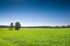 Free Green Grass Under Blue Bright Sky Stock Image - 19045831
