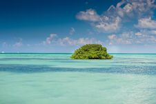 Free Island Of Mangrove Green Forest In A Blue Ocean Stock Photography - 19045992