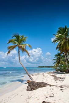 Green Palms On White Sand Beach Under Blue Sky Stock Photography