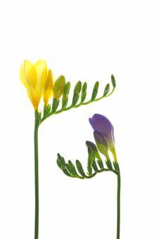 Free Springtime Stock Image - 19046451