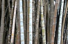 Free Bamboo Garden Royalty Free Stock Photography - 19046467