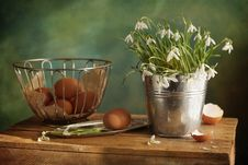 Free Easter Snowdrops Stock Photo - 19046570