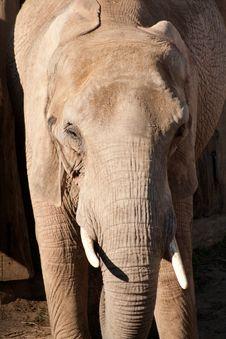 Free Elephant Royalty Free Stock Image - 19046596