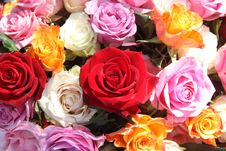 Free Rose Arrangement Stock Image - 19048091