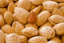 Free Almonds Stock Image - 19050021