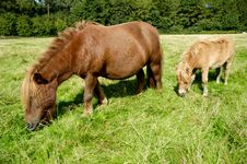 Free Horse And Foal Stock Photo - 19053070
