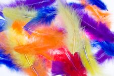 Free Feathers Stock Photo - 19054060