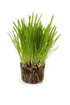Free Green Grass Royalty Free Stock Images - 19054149