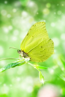 Free Brimstone On Branch. Royalty Free Stock Image - 19054566