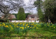 Free Arrival Of Spring In An English Hamlet Stock Image - 19054571