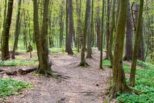 Free Path Through The Spring Forest Stock Images - 19056904