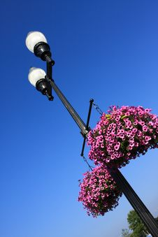 Free Street Lamp And Flower Royalty Free Stock Image - 19057066