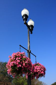 Free Street Lamp And Flower Royalty Free Stock Image - 19057136