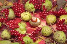Free Chestnuts And Autumn Leaves Royalty Free Stock Photography - 19057327