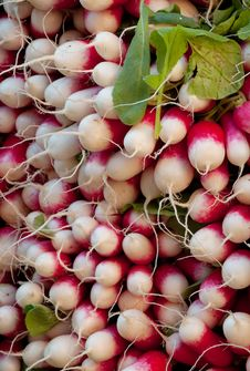 Radishes 2 Royalty Free Stock Photo