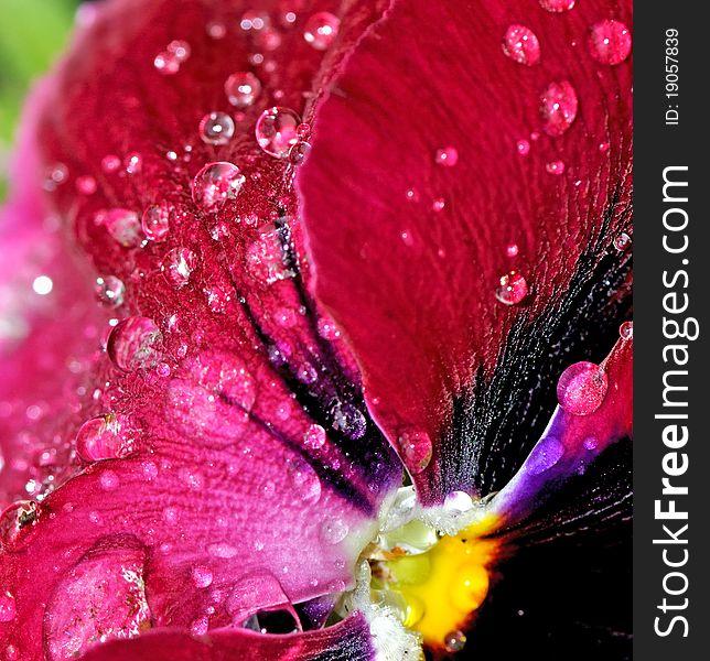 Raindrops on flower petals
