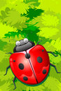Free Lady Bug Sitting On Leaf Stock Images - 19060734
